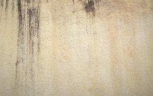 Algen an Fassaden vermeiden Peinture Schmitt Amende Waende Luxembourg Peinture Schmitt